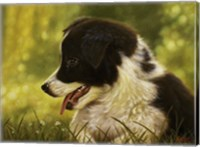 Border Collie Pup 2 Fine Art Print