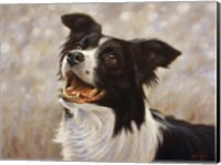 Border Collie 1 Fine Art Print