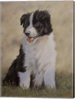 Border Collie 12 Fine Art Print