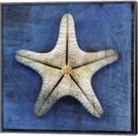 Armored Starfish Underside Fine Art Print