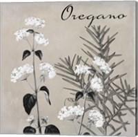 Flowering Herbs II Fine Art Print