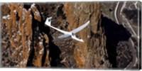 TG-15A Glider Fine Art Print