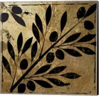 Bellissima II Fine Art Print