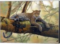 African Leopard Fine Art Print