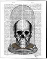 Skull In Bell Jar Fine Art Print