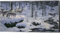 Winter's Cry Fine Art Print