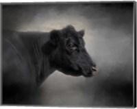 Portrait Of The Black Angus Fine Art Print