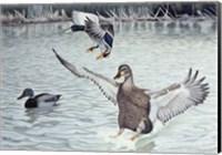 Decoyed Ducks Fine Art Print