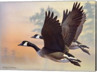 Canada Geese Fine Art Print