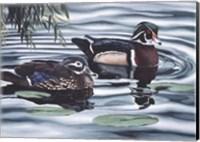 Pair of Ducks Fine Art Print