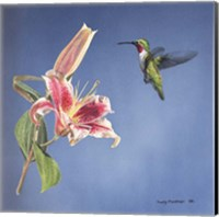 Hummingbird And Lily Fine Art Print