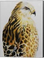 Hawk Fine Art Print
