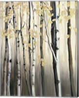 Golden Birch II Fine Art Print
