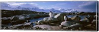 Penguins on Peterman Island Fine Art Print