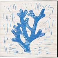 Sea Creature Coral Blue Fine Art Print