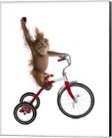 Monkeys Riding Bikes #2 Fine Art Print