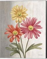 Gerber Daisies Fine Art Print