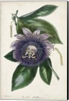 Plum Passion Flower Fine Art Print
