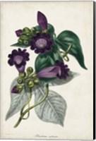 Plum Foxgloves Fine Art Print