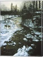 Winter Creek & Whitetails Fine Art Print