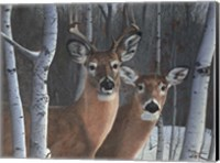 Deer Magic Fine Art Print