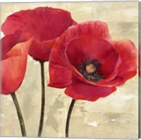 Red Poppies (Detail) Fine Art Print
