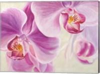 Purple Orchids Fine Art Print