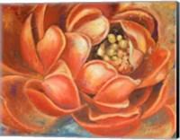 Red Lotus I Fine Art Print