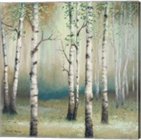 Late September Birch II Fine Art Print