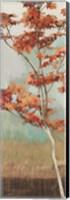 Maple Tree I Fine Art Print