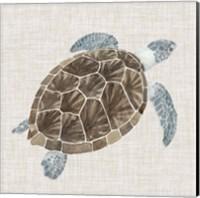 Sea Turtle I Fine Art Print