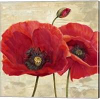 Red Poppies (detail II) Fine Art Print