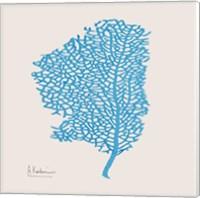 Cobalt Sea Fan Fine Art Print