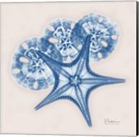 Cerulean Starfish and Sand Dollar Fine Art Print