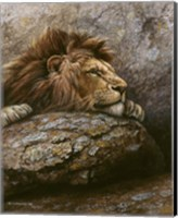 Lion Male 2 Fine Art Print