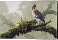 Ornate Hawk - Eagle Fine Art Print