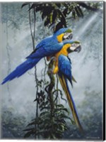 Blue And Yellow Macaws 2 Fine Art Print