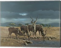 Greater Kudus Fine Art Print