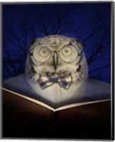 Book Owl Fine Art Print