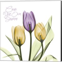 Purple Sunshine Tulips Fine Art Print
