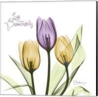 Live Passionately Tulips Fine Art Print