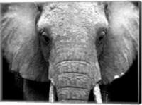 Elephant Lore Fine Art Print