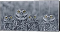 Pop of Color Burrowing Owl Family Fine Art Print