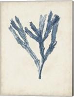 Seaweed Specimens I Fine Art Print