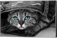 Pop of Color Kitten Fine Art Print