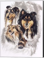 Collie Fine Art Print