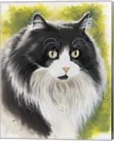 Maine Coon Fine Art Print