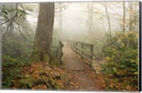 Alum Trail Fine Art Print