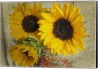 Sunflowers I Fine Art Print