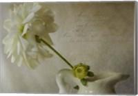 White In White Fine Art Print